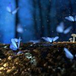 Vlinderkweek